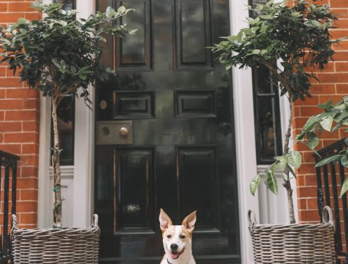 Favorite Dog-Friendly Spots in New York City.