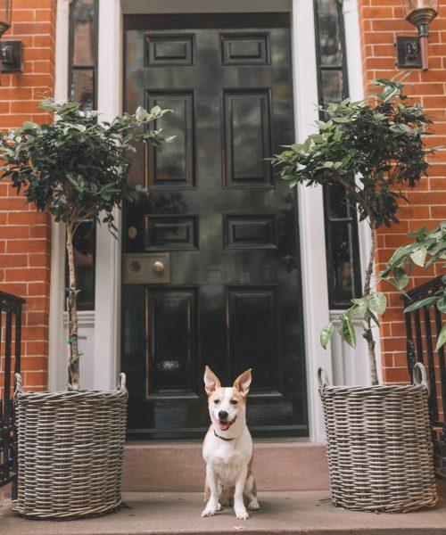 Favorite Dog-Friendly Spots in New York City.